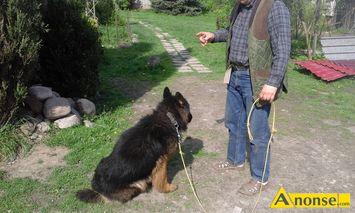Rewelacyjny zwierzęta i rośliny zwierzęta domowe i akcesoria lubelski ZE03